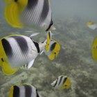 Ecosistema de océanos para niños