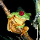 ¿Cómo se les llama a las personas que estudian a los reptiles y anfibios?