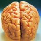 Trabajos que estudian la psicología fisiológica y la neurociencia del comportamiento