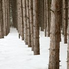 How to Start a Tree Farm