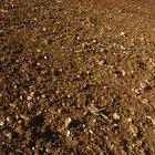 Los componentes orgánicos del suelo