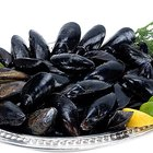 Cooking Half Shell Mussels