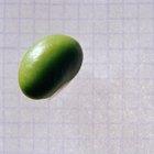 ¿Cuáles son los beneficios para la salud de las nueces de soja?