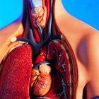 ¿Cuál es la función de los pulmones?
