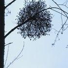 ¿Qué tipo de plantas viven en los árboles?