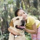 Pomada oftálmica de terramicina para perros