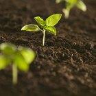 ¿Qué le hace el cloro a una planta?