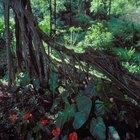 Proyectos de ciencias sobre la selva para niños de primer año de primaria