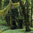 Las partes de la selva