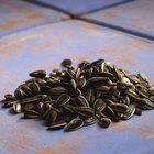 ¿Cuántas calorías hay en una cucharada de semillas de girasol?
