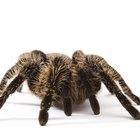Cómo saber si te picó una araña