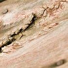 Cómo reparar madera podrida