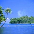 Cómo hacer una isla tropical para un proyecto escolar