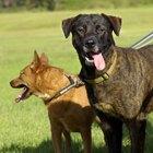 Qué se necesita  para comenzar un negocio de  paseo de perros