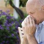¿De qué alimentos debes alejarte si eres alérgico al polen?