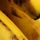 ¿Con qué frecuencia debo comer bananas?