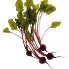 Cuáles son los beneficios de comer hojas verdes de remolacha?