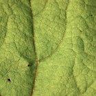 Partes de las células de una planta