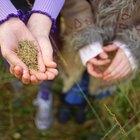 """""""Cómo preservar la biodiversidad"""" para niños"""