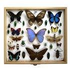Cómo preservar una colección de mariposas