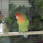 Cómo construir una trampa para atrapar pájaros vivos
