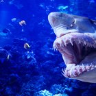 How to Become a Vet Tech for Marine Animals
