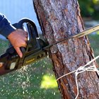How to Estimate Tree Removal Jobs