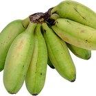 ¿Los plátanos verdes pueden elevar tu azúcar en sangre?