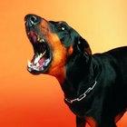 Síntomas de la rabia después de una mordida de perro
