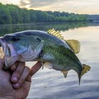 The Best Bass Fishing Lakes in Ohio