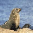 Diferentes tipos de focas
