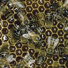 Cómo derretir cera de abeja