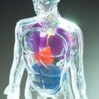 Lista de los sistemas corporales
