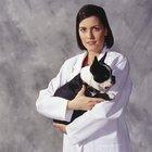 Reacciones adversas de un cachorro a las vacunas