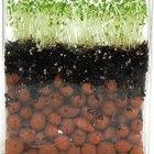 Beneficios para la salud del jugo de alfalfa