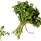 How Do I Clean Water Cress?