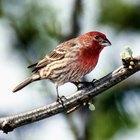 Cómo armar una jaula de madera para pájaros