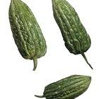 ¿Pueden ciertas plantas ayudar a restaurar la sensibilidad a la insulina?
