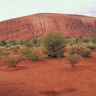 Los tres ecosistemas del bioma del desierto