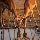 La importancia del agua en el reino animal