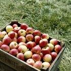 Calorías en la manzana Honeycrisp