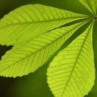 Los factores que limitan la fotosíntesis