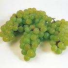 Valor nutricional de las uvas verdes sin semilla