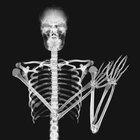 El desarrollo de los huesos durante el desarrollo fetal