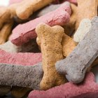 How to Start a Dog Treat Business in Washington State