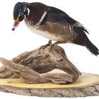 How do I Use Borax to Preserve a Bird?