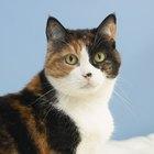 Cuidados post quirúrgicos para gatos con una fractura en una pata