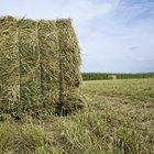 Alfalfa Hay Nutrition Information