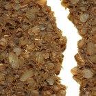 ¿Puede el gluten debilitar mi sistema inmune?