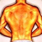 Cómo construir los músculos dorsales